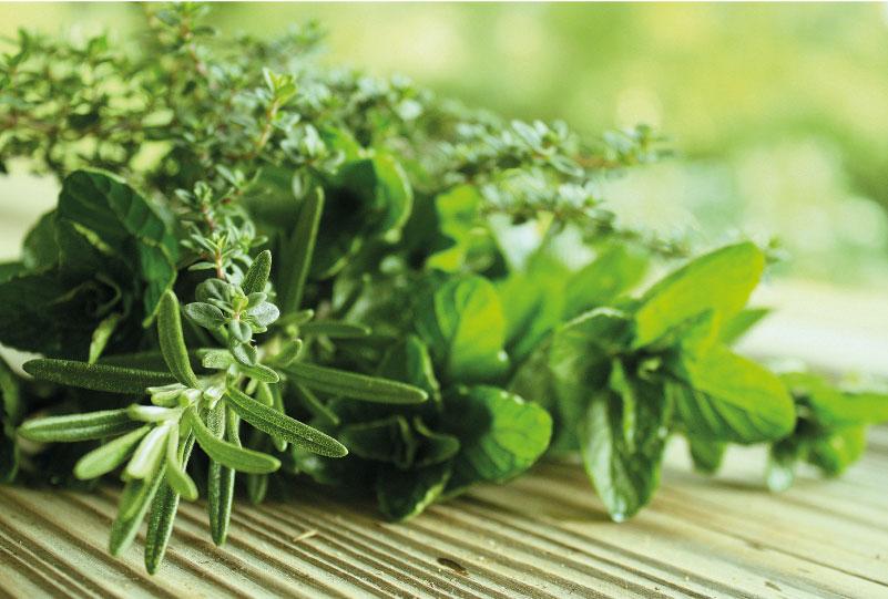 Venerdì 30 Novembre – Cibo aromatico e piante balsamiche