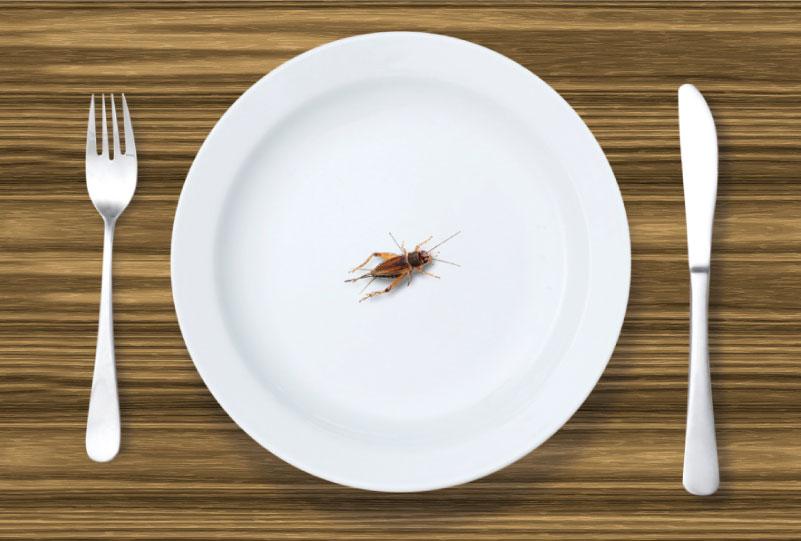 Giovedì 13 Dicembre – Niente grilli per la testa, solo nel piatto!